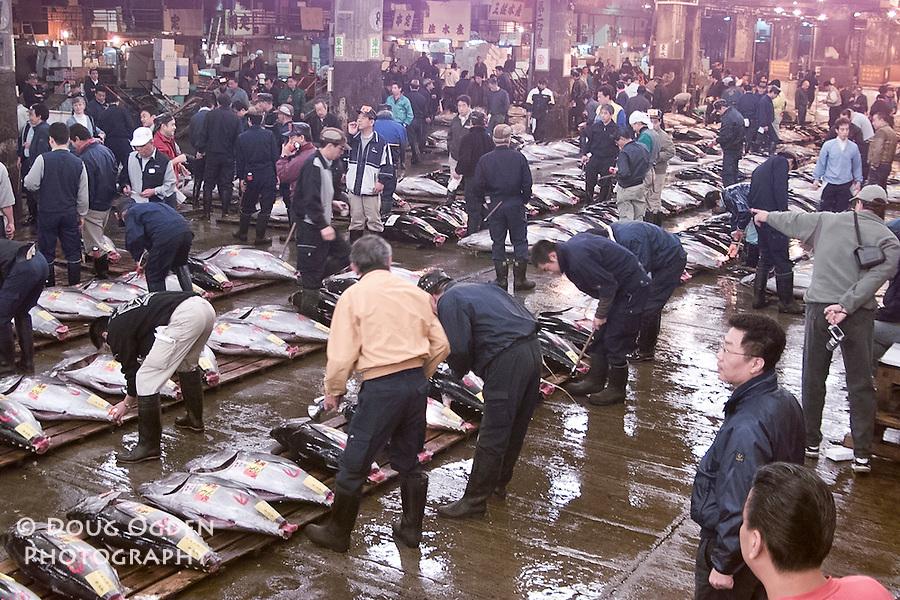 Fresh Big Eye Tuna being graded and sold, Tsukiji fish market, Tokyo Japan