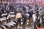 Fresh Big Eye Tuna being graded and sold, Tsukiji fish market, Tokyo Japan