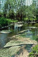 - Ticino natural park, swampy area ....- parco naturale del Ticino, zona paludosa
