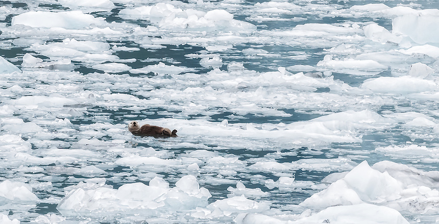 Otter and Ice