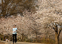 A woman and dog walk among the flower trees in Freedom Park in Charlotte, NC