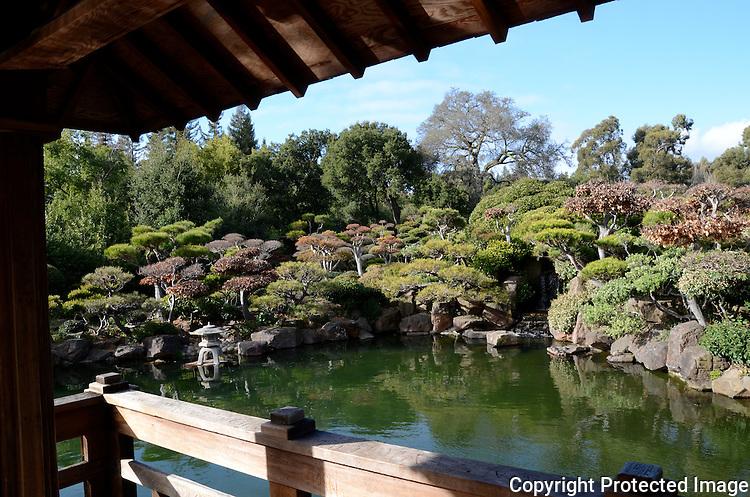 Japanese Garden Hayward Ca