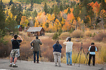 Photographers line-up to photograph aspen in autumn color, rustic cabin, Hope Valley, Alpine Co., Calif.