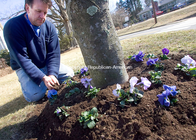 WOODBURY, CT- 17 MARCH 2008- 031708JT02-<br /> Three days before the first day of spring, Jerry Stomski plants pansies in front of his house on Route 47 near Cam Avenue in Woodbury on Monday.<br /> Josalee Thrift / Republican-American