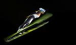 11Feb2014 - Ski Jumping