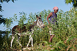 Rose Marie Pierre walks with her donkey in Picmy, a village on the Haitian island of La Gonave where Service Chrétien d'Haïti is working with survivors of Hurricane Matthew, which struck the region in 2016. SCH, a member of the ACT Alliance, supports agriculture on the island by providing tools, seeds, and technical support and training for farmers. It also provided donkeys to many families. In Pierre's case, the donkey helps her bring water from a long distance to her family.