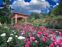 Gazebo in Portland Rose Test Garden. Orefgon