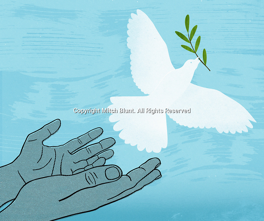 Hands releasing white dove with olive branch ExclusiveImage