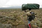 Apres cinq a six heures d efforts, nous emergeons de la foret pour atteindre le plateau de Shira a plus de 3000 metres d'altitude. Premier campement dans des bruyeres odorantes et premiers froids africains...