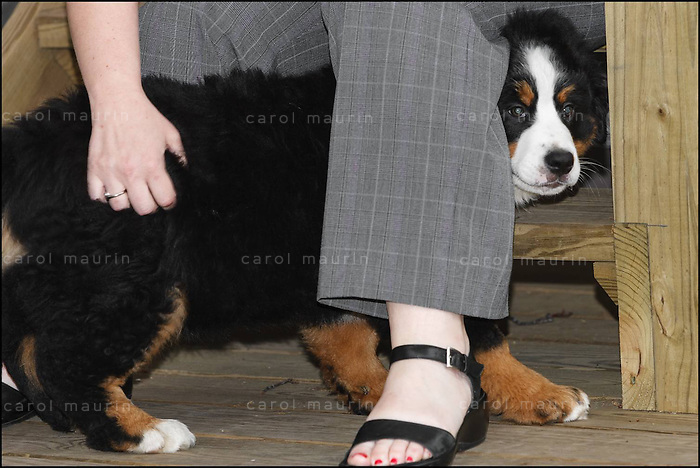 Dog hiding behind person's leg.