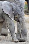 20160330 Zoo Wuppertal, Elefantenbaby Tuffi