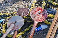 Tools used to cut up Bowhead whales hunted by the Inupiat of Kaktovik, Alaska.