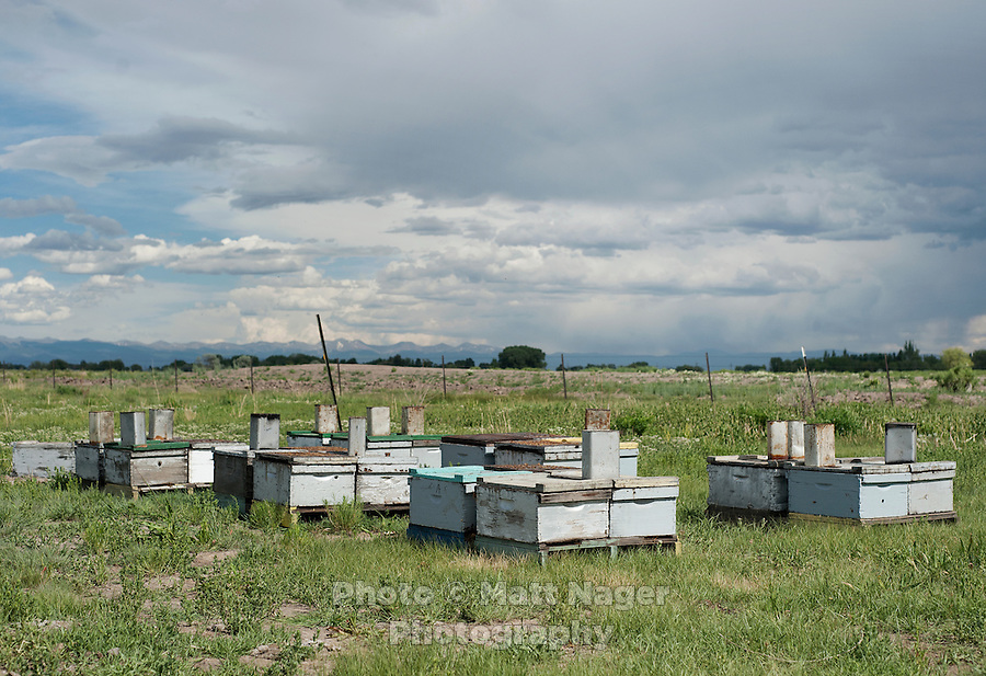 Brent Edelen's (cq) bee hives near Alamosa, Colorado, June 1, 2012. Bee keeping has been in Edelen's family for over six generations, originating in Switzerland...Photo by MATT NAGER