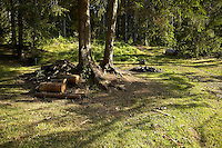 FOREST_LOCATION_90120