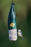 Blaumeise, an der Vogelfütterung, Fütterung  am Fettfutter, Meisenknödel, Blau-Meise, Meise, Cyanistes caeruleus, Parus caeruleus, blue tit. Ganzjahresfütterung, Vögel füttern im ganzen Jahr, Vogelfutter der Firma GEVO