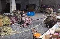 November 28, 2015, Yiwu, China - A married migrant worker couple sort tinsel at the Xin Shua tinsel factory. The factory makes around 30 million RMB (GPB 3.12) of tinsel each year.Photo by Dave Tacon / Sinopix