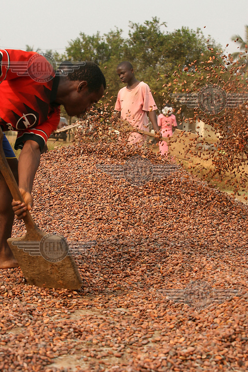 Locals dry cocoa seeds in the sun in Kembong.