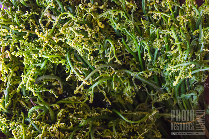 Ho'i'o, or fiddle head fern, is also known as rabi in Japanese; it is seen close up at a produce booth at the Hilo Farmers Market, Big Island of Hawai'i.