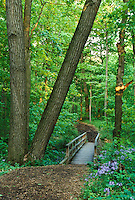 A tranguil path amidst spring flowers surrounded by lush maple trees at the Morton Arboretum in Lisle, Illinois.