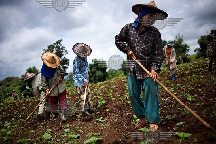 Karen workers from Burma work in fields in Mae Sot.