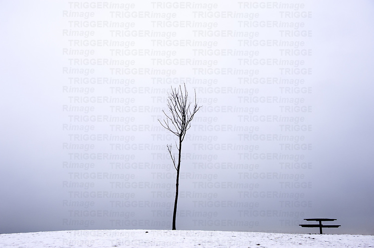 Lone stick tree and picnic table sitting on a snowy incline with nothing else around.