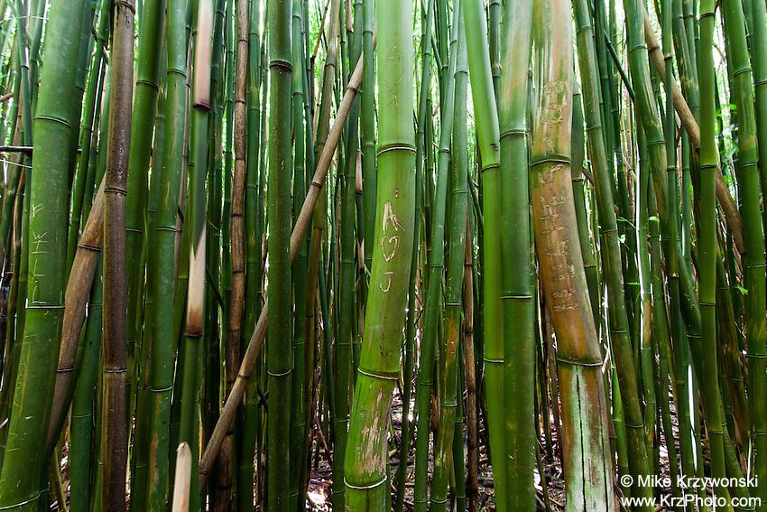 Thick bamboo forest, Pipiwai hiking trail, Haleakala National Park, Kipahulu, Maui