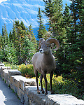 Wildlife Photos from Montana & Wyoming