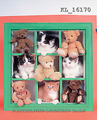 Interlitho, Alberto, CUTE ANIMALS, teddies, photos, teddies, cats(KL16170,#AC#)