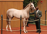 Hip #53 Unbridled's Song - A Footstep Away at the Keeneland September Yearling Sale.  September 10, 2012.