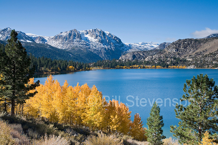 A picture of yellow fall aspen trees with snowy mountians and June Lake in the Sierra mountains of California