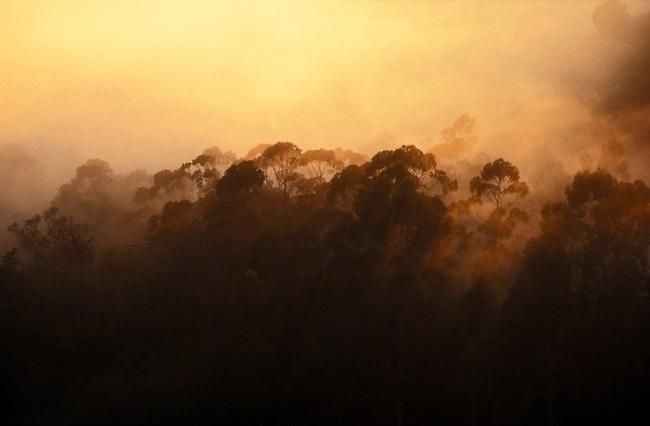 Fog on Spring Mountain