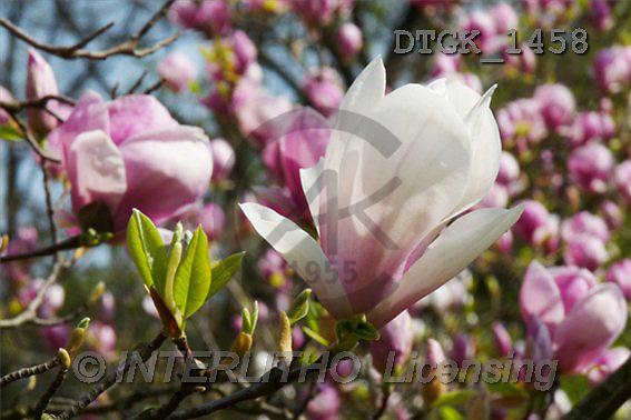 Gisela, FLOWERS, photos(DTGK1458,#F#) Blumen, flores, retrato