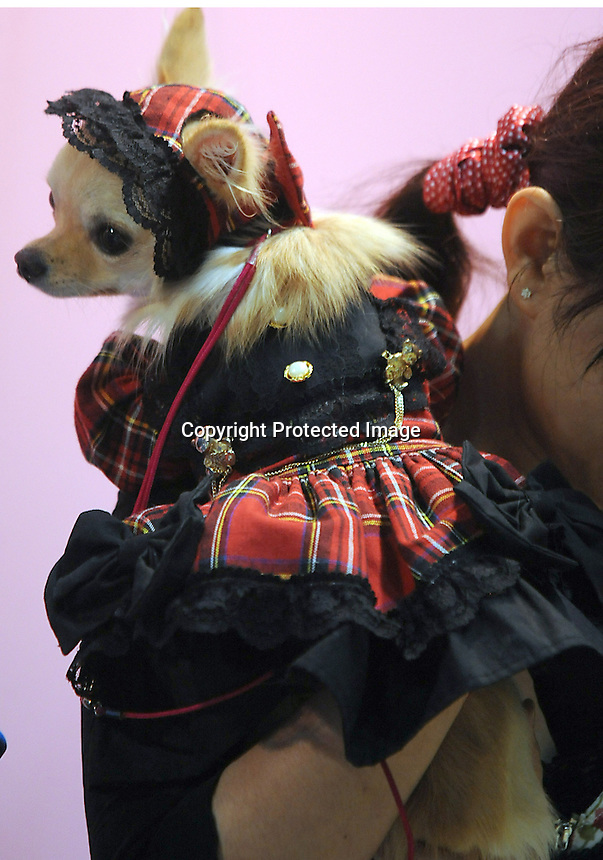 A Chiuaua porting a tartan style maid outfi  at the Osaka Pet Expo fashion show held from 23rd till 25th September 2011, Japan.<br /> <br /> Photo by Richard Jones