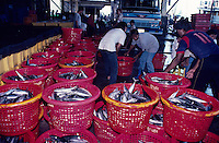 Fish wholesale market