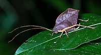 A katydid offers a great example of mimicry in the animal kingdom.