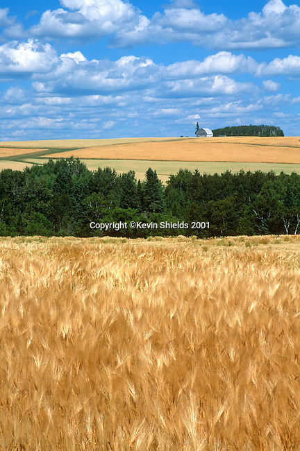 Summer view of farmland in Fort Fairfield, Aroostook County, Maine, USA