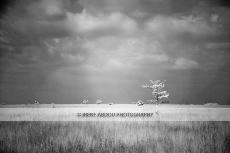In this infrared photograph, at Pa-hay-okee Overlook, visitors see a never-ending stretch of flat land with an occasional tree.  Pa-hay okee Overlook lies nearly halfway between the Everglades National Park's Ernest F. Coe and Flamingo Visitor Centers.