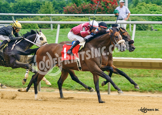 Summer Soldier winning at Delaware Park on 7/30/16