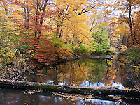 The Galien River runs through an autumn forest in Warren Woods State Park, in Berrien County, Michigan