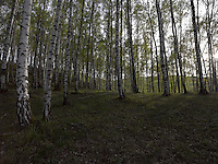 FOREST_LOCATION_90059