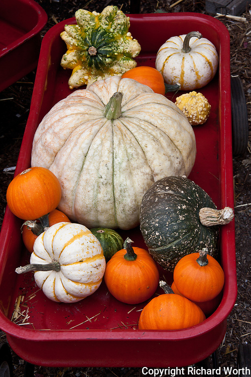 A little red wagon displays just a few of the varieties of gourds, including, of course, pumpkins.