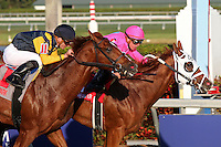 HALLANDALE BEACH, FL - JANUARY 28:  #1 Taghleeb with jockey Tyler Gaffalione on board defeats #11 Sadler's Joy with Julien Leparoux up by a head in the W. L. McKnight Stakes on Pegasus World Cup Invitational Day at Gulfstream Park on January 28, 2017 in Hallandale Beach, Florida. (Photo by Liz Lamont/Eclipse Sportswire/Getty Images)