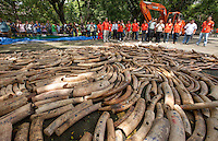 Philippines government workers wait prior to five tonnes of confiscated ivory from the Philippines stockpile since 2009 being destroyed by excavator at the Philippines Government Protected Areas and Wildlife Bureau of the Department of Environment and Natural Resources, Quezon City, Manila, Philippines, 21 June 2013.