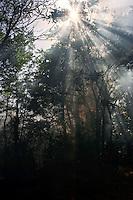 Roma 8 Agosto 2012.Incendio alla stazione ferroviaria di via Val d'Ala si è sviluppato lungo tutta la linea a servizio del quartiere Monte Sacro e al Parco delle Valli che si trova all'interno della Valle dell'Aniene in zona Conca d'Oro. Un addetto della squadra antincendio della Protezione Civile durante le operazioni  di  spegnimento del incendio.