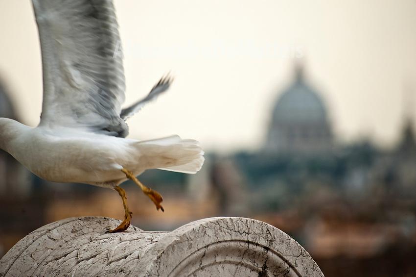 Rome - 2013 - Cupola della Basilica di San Pietro