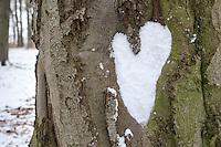 Naturkunst im Winter, Herz aus Schnee an Baum, Stamm, Rinde