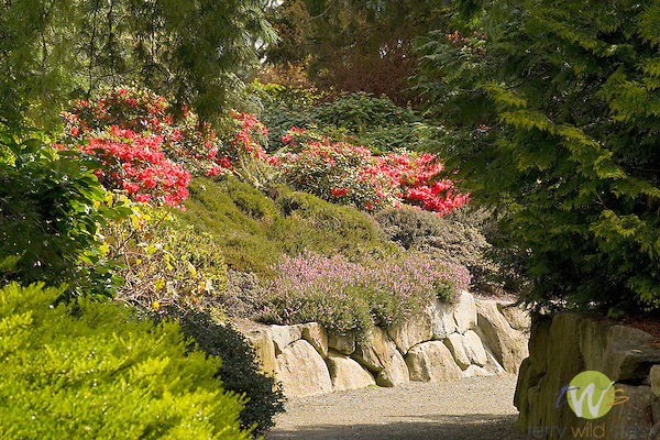 Kubota Garden, Seattle, WA. .