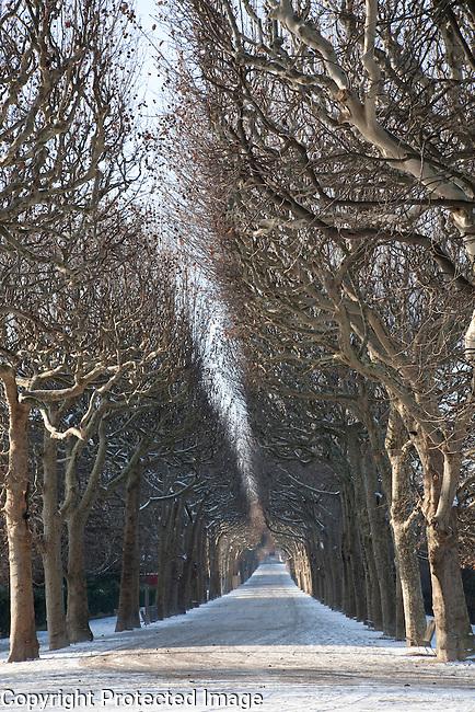 Tree Lined Path in Jardin des Plantes Park, Paris, France