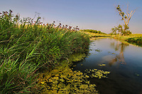 Nippersink Creek flows through the prarie and grasslands of Glacial Park in McHenry County, Illinois