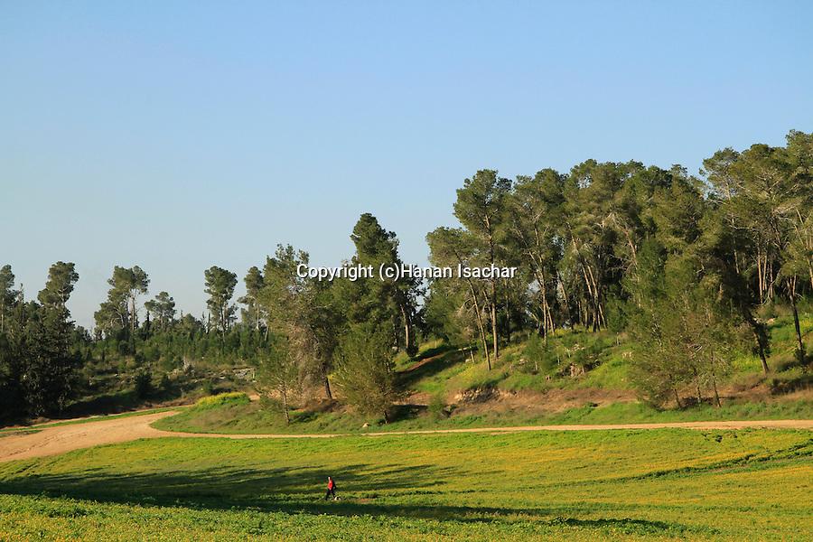 Israel, Shephelah, springtime in Ben Shemen forest